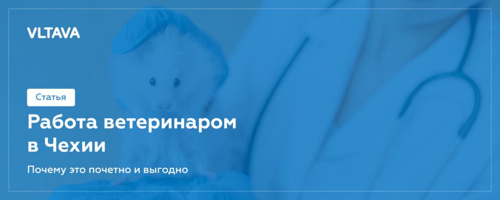 Работа ветеринаром в Чехии: почему это почетно и выгодно