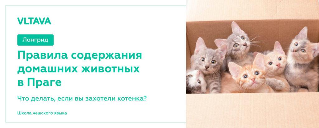 Правила содержания домашних животных в Праге: что делать, если вы захотели котенка?